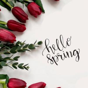 Hello spring flowers.